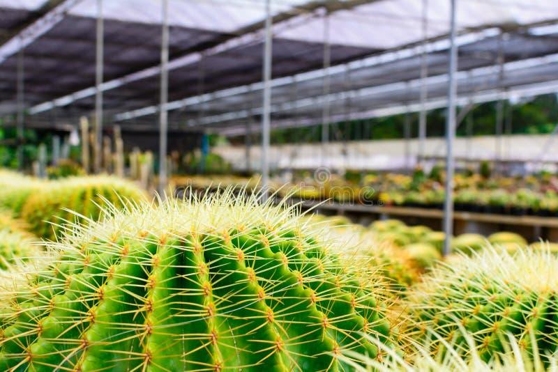 Tienda del árbol del cactus con la cría en la casa para la venta fotos de archivo libres de regalías