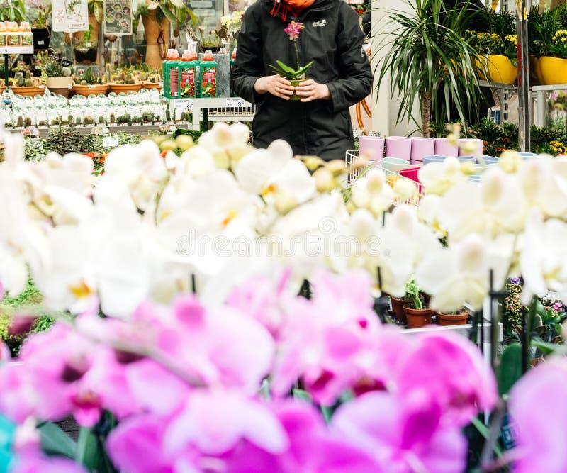 Tienda del florista de la mujer que hace compras con hermoso en flor de la orqu?dea de la floraci?n foto de archivo libre de regalías