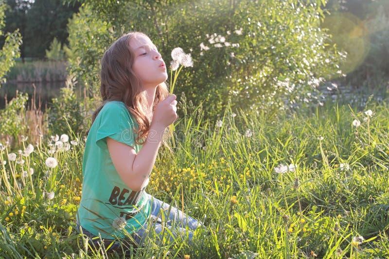 Download Tiener Blazende Zaden Van Een Paardebloembloem In Een De Lentepark Stock Afbeelding - Afbeelding bestaande uit weide, holding: 107707799