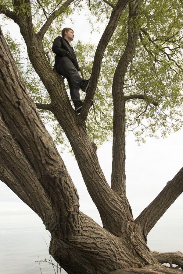 Tiener omhoog in boom het denken stock foto's