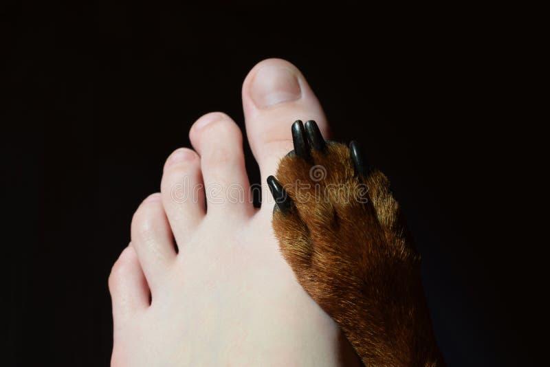 Tiener ` s verlaten voet en hondpoot royalty-vrije stock afbeeldingen