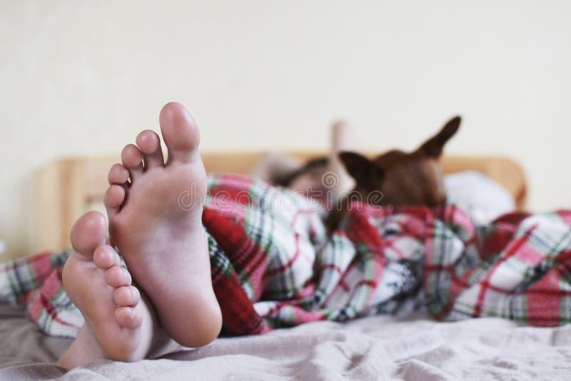 Tiener` s voeten op bed en hond stock afbeelding