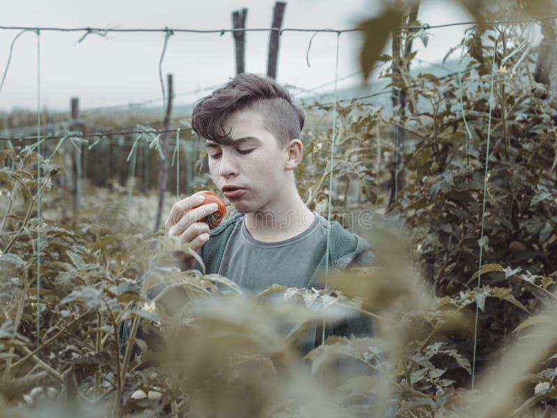 Tienerjongen die verse geplukte tomaat eten bij groene aanplanting stock fotografie