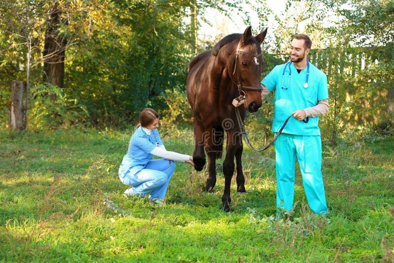 Tierärzte in der Uniform schönes braunes Pferd überprüfend lizenzfreie stockbilder