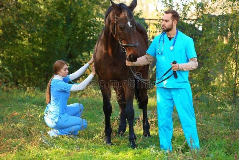Tierärzte in der Uniform schönes braunes Pferd überprüfend lizenzfreies stockfoto