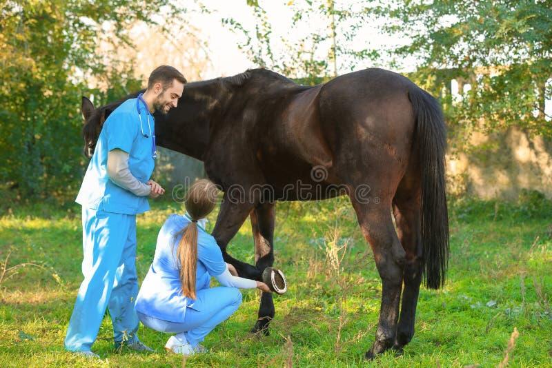 Tierärzte in der Uniform schönes braunes Pferd überprüfend lizenzfreie stockfotografie