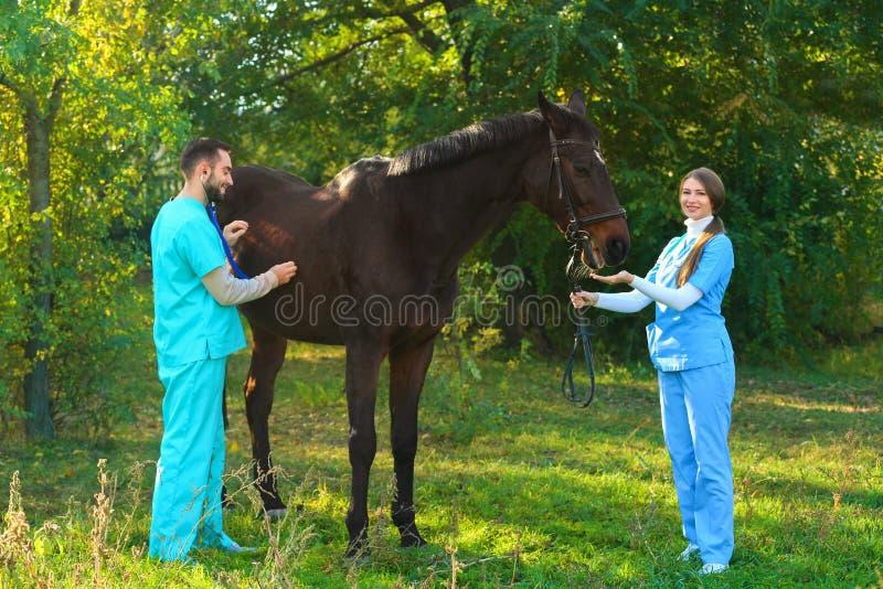 Tierärzte in der Uniform schönes braunes Pferd überprüfend lizenzfreies stockbild