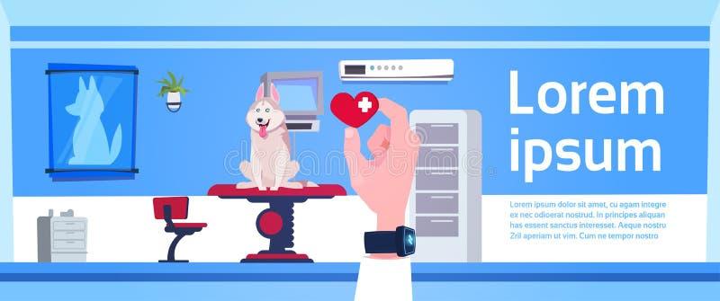 Tierärztlicher Doktor Hand Holding Pill über Tierarzt-Klinik-Büro-Innenraum-Konzept lizenzfreie abbildung