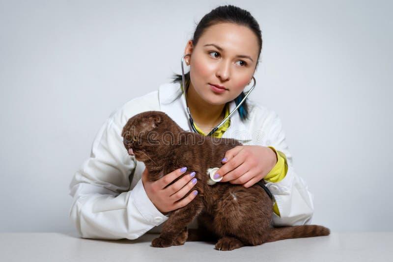 Tierärztlicher Doktor mit Stethoskop überprüfend herauf Katze Medizin-, Haustier-, Tier- und Leutekonzept stockbilder