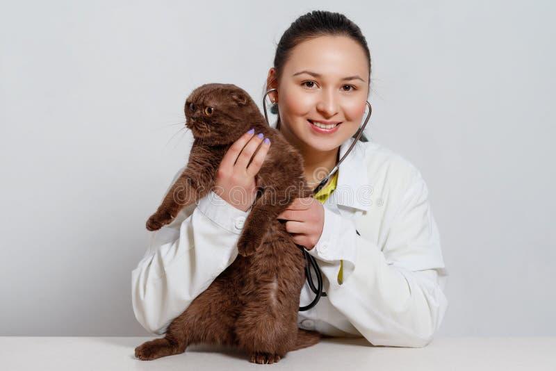 Tierärztlicher Doktor mit Stethoskop überprüfend herauf Katze Medizin-, Haustier-, Tier- und Leutekonzept lizenzfreie stockbilder