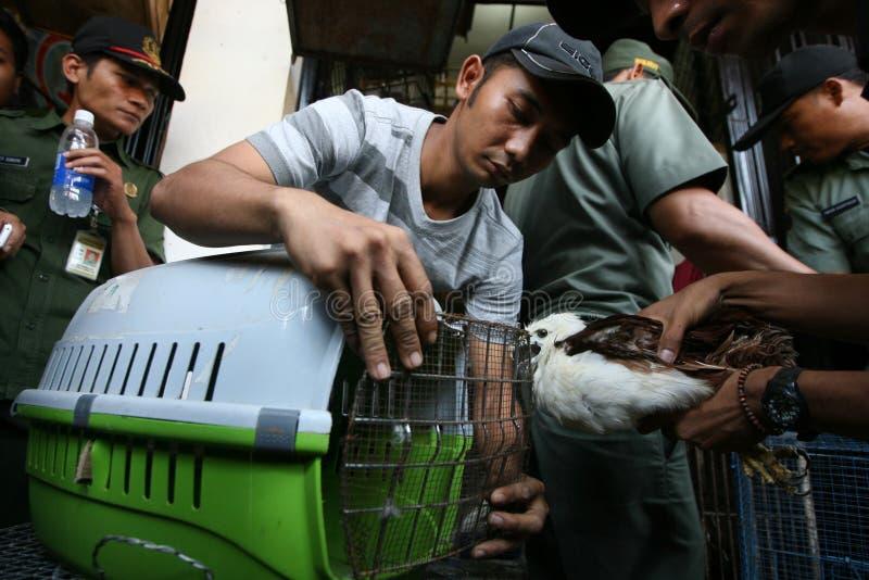 Tier gehandelt lizenzfreies stockfoto