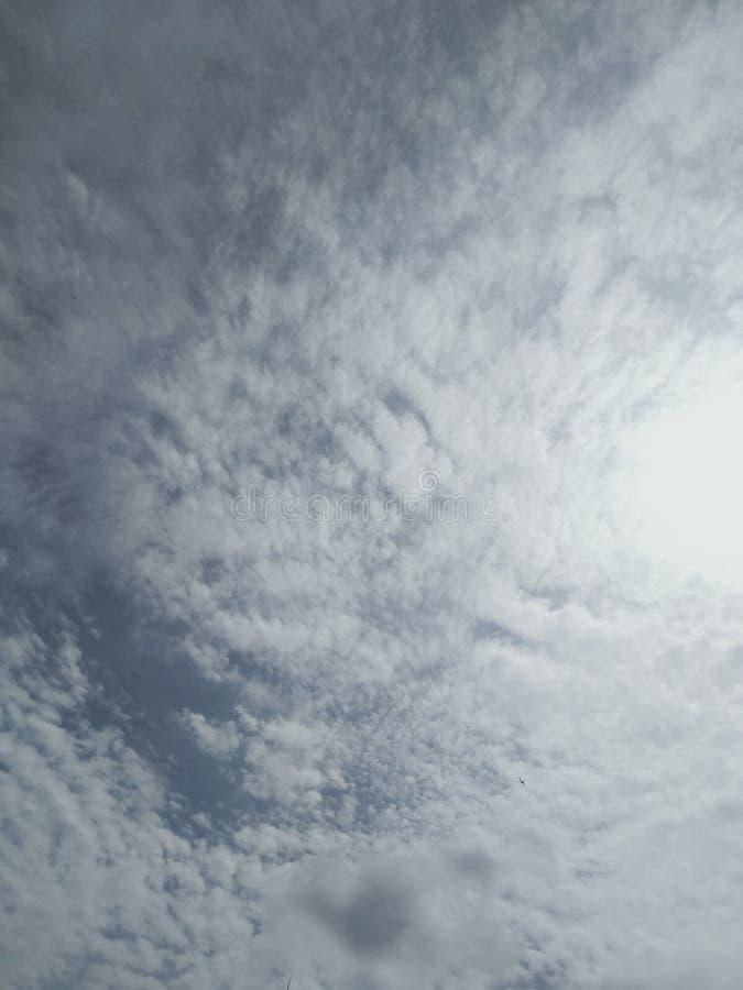 Tier im Himmel stockfotografie
