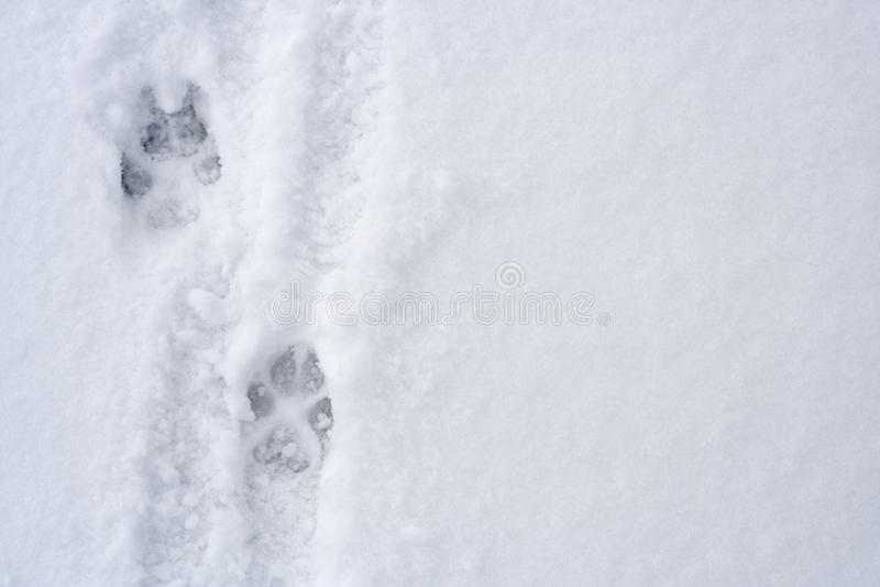 Tierabdrücke auf Schnee lizenzfreies stockbild