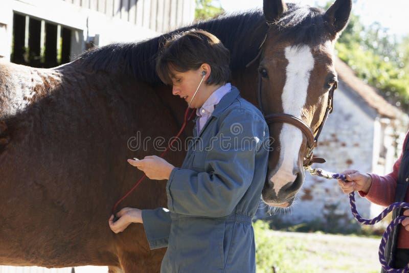 Tierarzt-überprüfenpferd mit Stethescope stockfotos