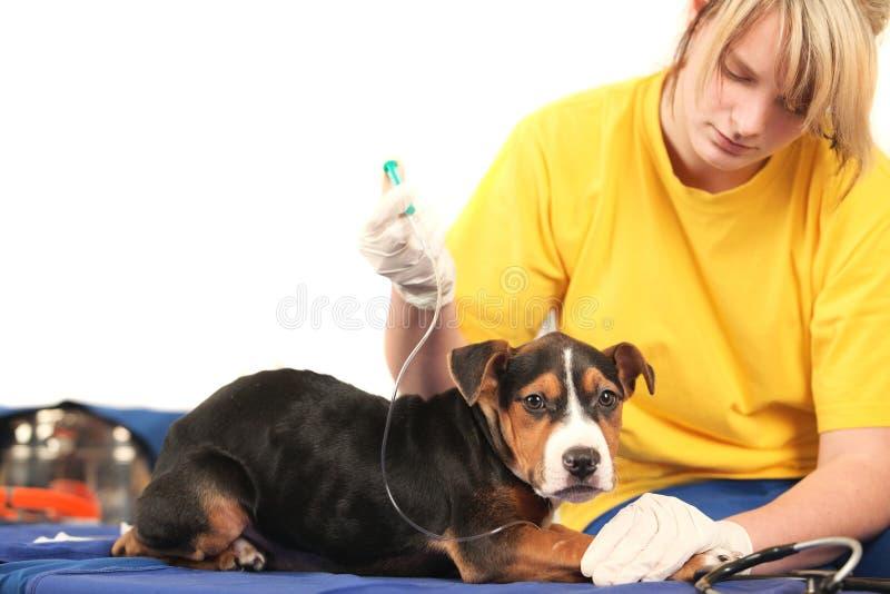 Am Tierarzt lizenzfreies stockfoto