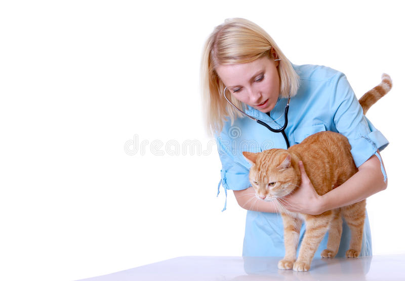 Tierarzt auf Weiß lizenzfreie stockfotos