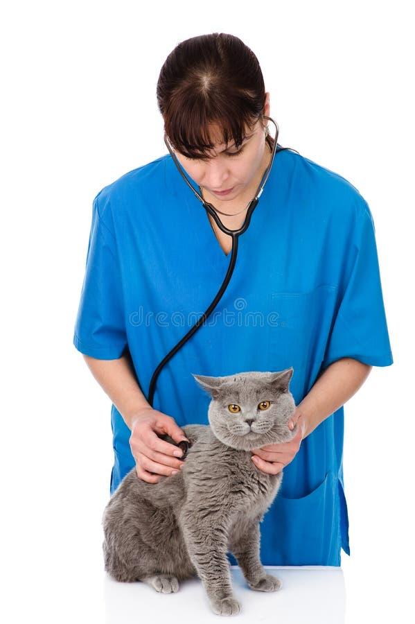 Tierarzt, der eine Katze überprüft Getrennt auf weißem Hintergrund lizenzfreie stockfotos