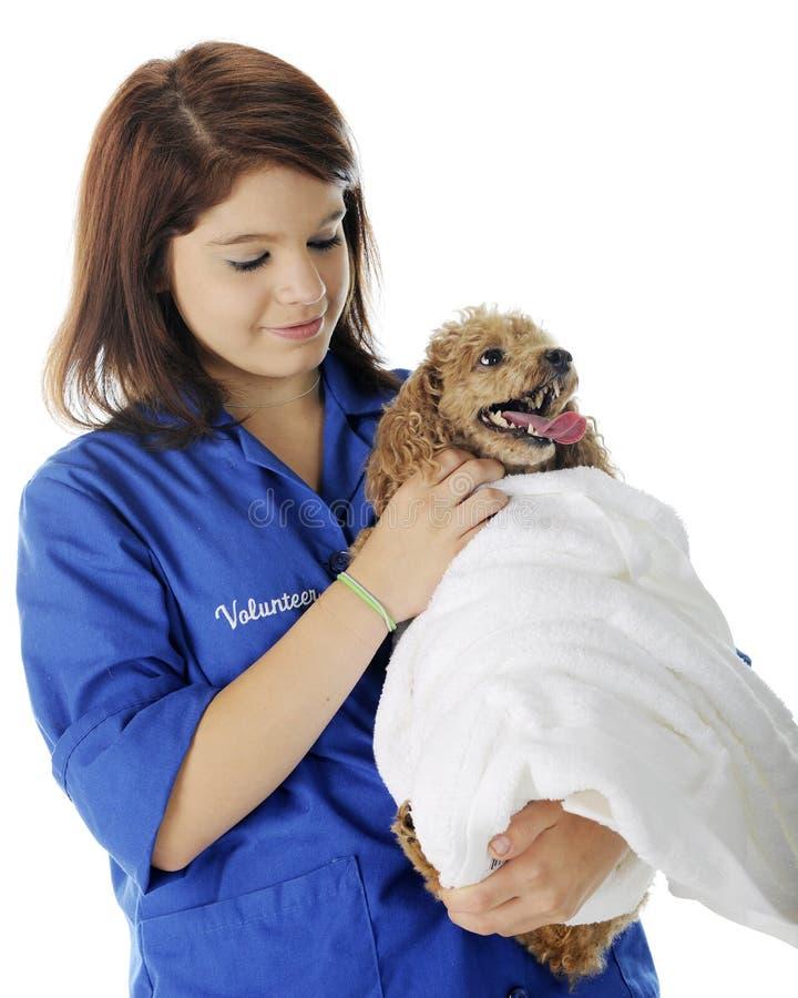 Tierarzt-Freiwilliger, der den Patienten tröstet lizenzfreies stockbild