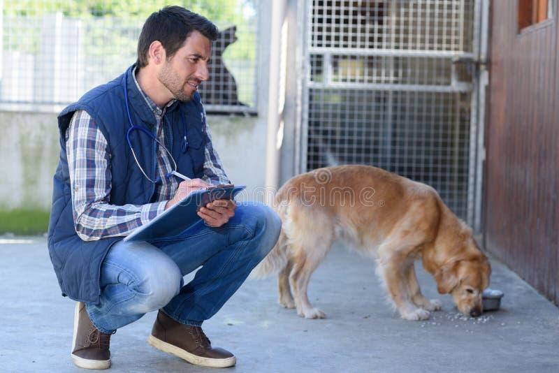 Tierarzt, Hund beim Essen beobachtend lizenzfreies stockbild
