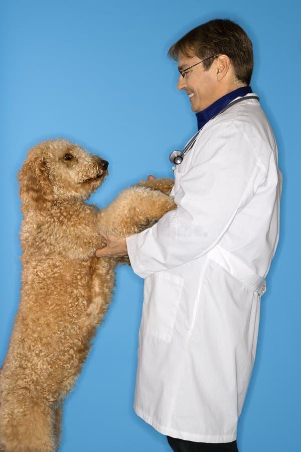 Tierarzt mit Hund. stockbild