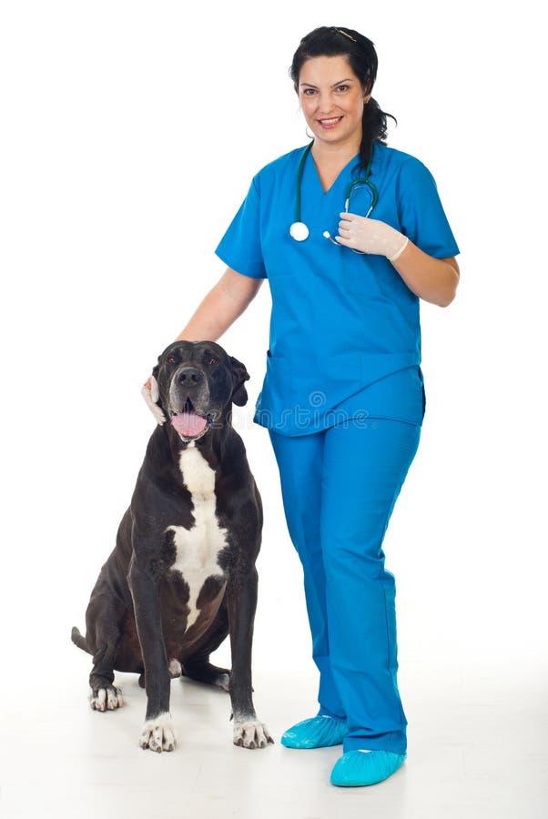 Tierarzt mit Hund des großen Dänen lizenzfreie stockfotos