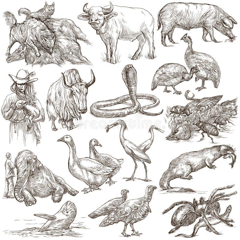 Tiere auf der ganzen Welt - ein Hand gezeichneter lebensgroßer Satz Zeichnen Sie a vektor abbildung