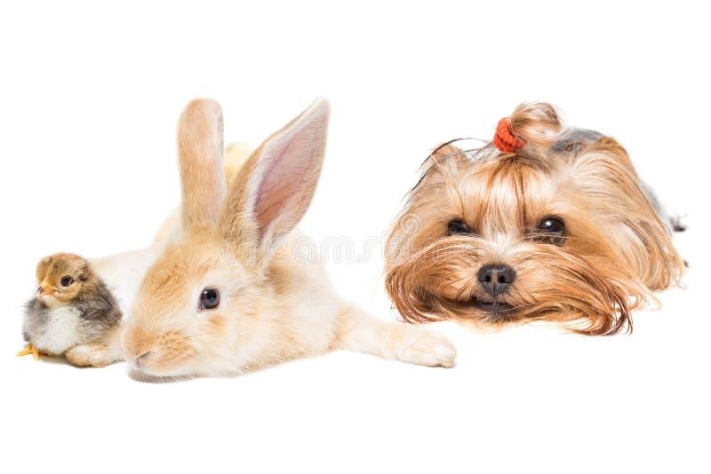 Tiere auf weißem Hintergrund lizenzfreies stockbild