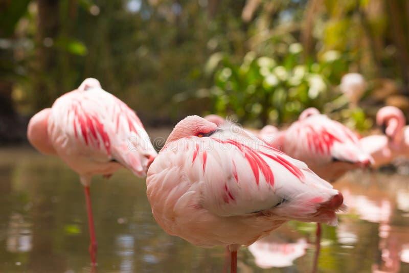 Tiere des Oasen-Parks, Fuerteventura, Spanien lizenzfreies stockbild