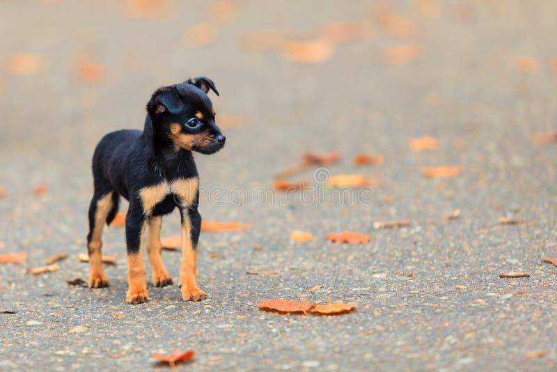 Tiere - kleiner Hundenettes Welpenhaustier im Freien lizenzfreies stockbild