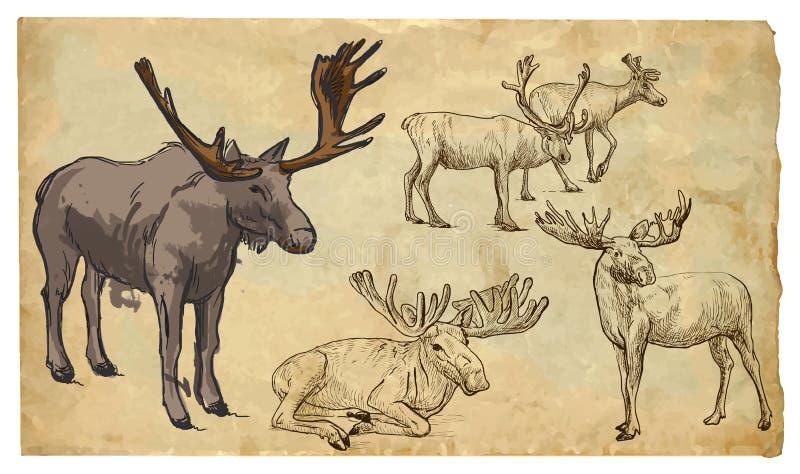 Tiere, Thema: REINDER - Hand gezeichneter Vektorsatz lizenzfreie abbildung