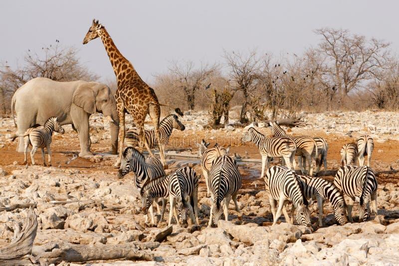 Tiere um ein Wasserloch stockbild