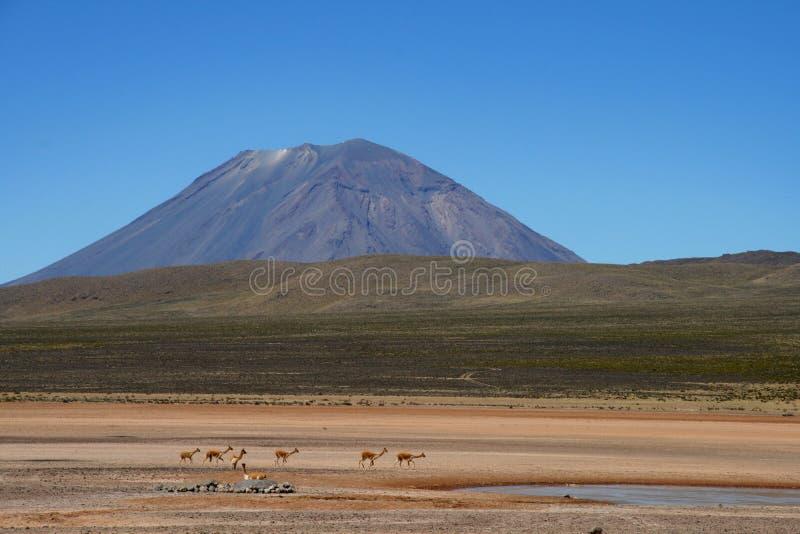 Tiere vor dem nebelhaften Vulkan in Peru stockfotografie