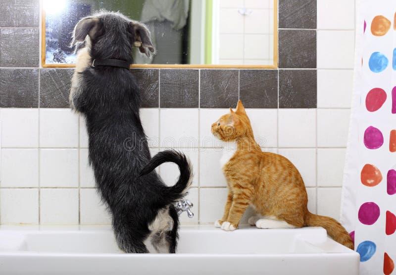 Tiere zu Hause Hund und Katze, die zusammen im Badezimmer spielen lizenzfreie stockfotos