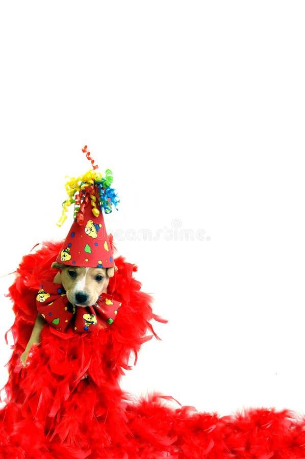 Tierfeiern lizenzfreie stockfotos