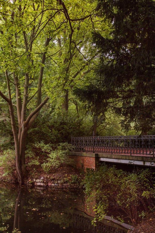 Tiergarten Берлин Германия стоковая фотография rf