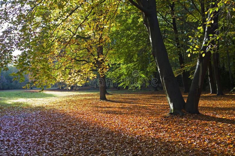Tiergarten в Берлин стоковые фотографии rf