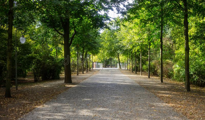 Tiergarten park in Berlin, Germany. Autumn with falling leaves and green trees background. Tiergarten park with lush flora in Berlin. Autumn with falling leaves stock photos
