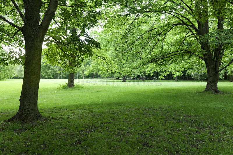 Tiergarten park. Berlin. Green lush forest at Tiergarten Park. Berlin stock image