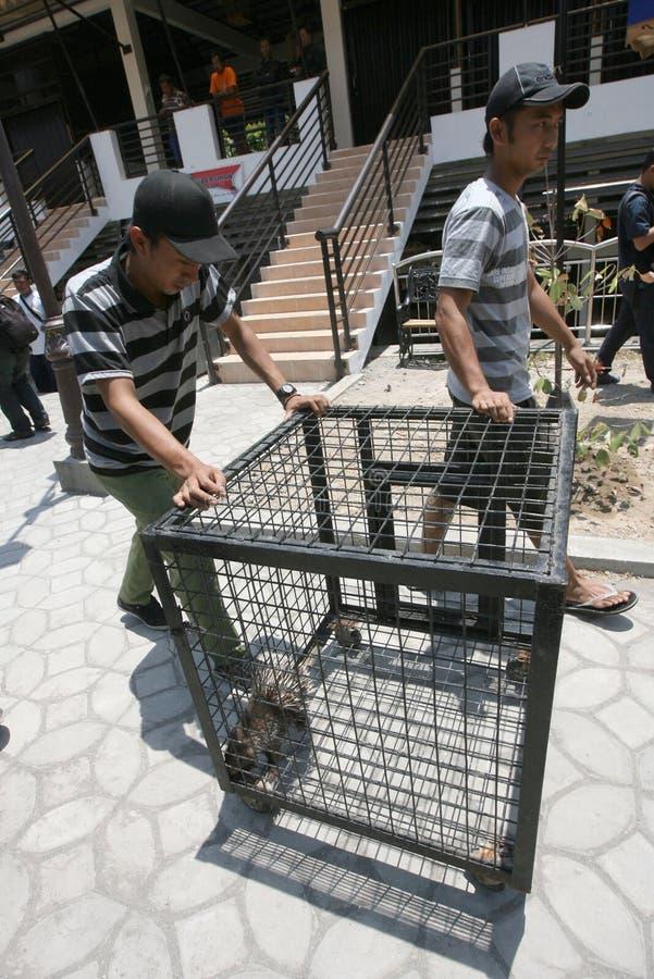 Tierhandel stockbild
