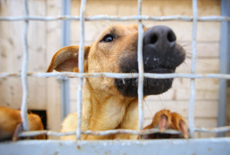 Tierheim Internat für Hunde stockbild