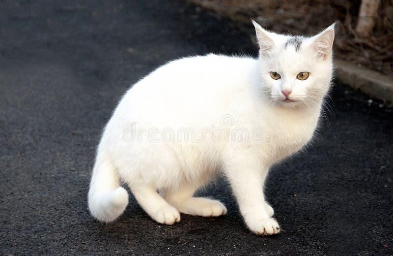 Tierisches schönes Nahaufnahmesäugetier der weißen Katze draußen lizenzfreies stockfoto