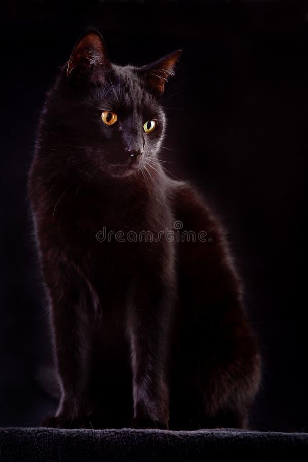 tierisches Unglück neugierige der schwarzen Katze gespenstische Nacht lizenzfreies stockfoto
