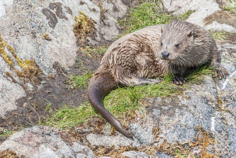 Download Tierotter Der Wild Lebenden Tiere See Stockfoto - Bild von wasser, wildnis: 96927714