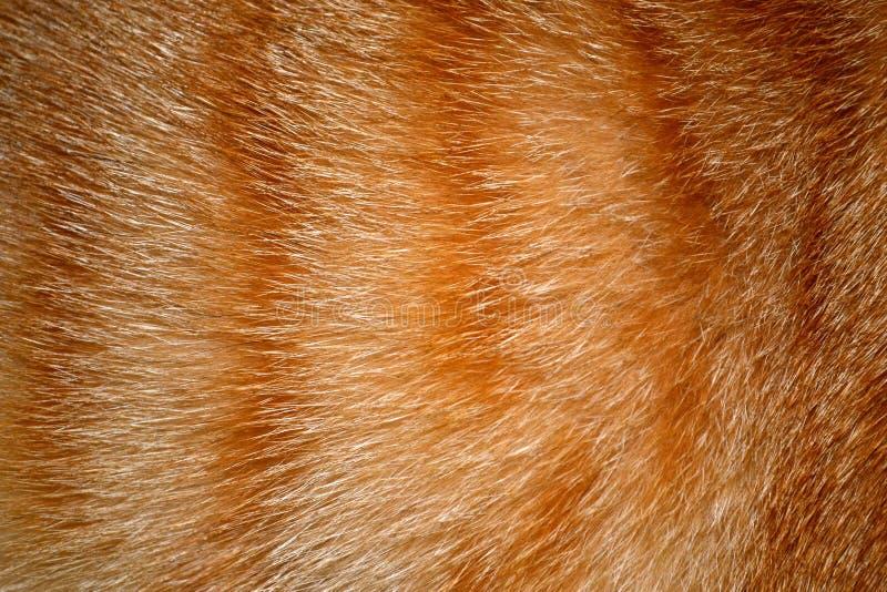 Tierpelz-Beschaffenheits-Hintergrund stockbild