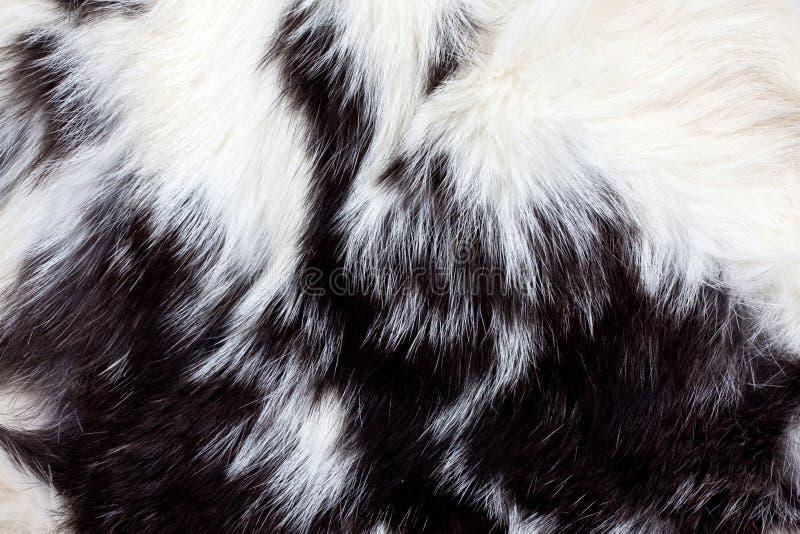 Tierpelz-Hintergrund stockfotos