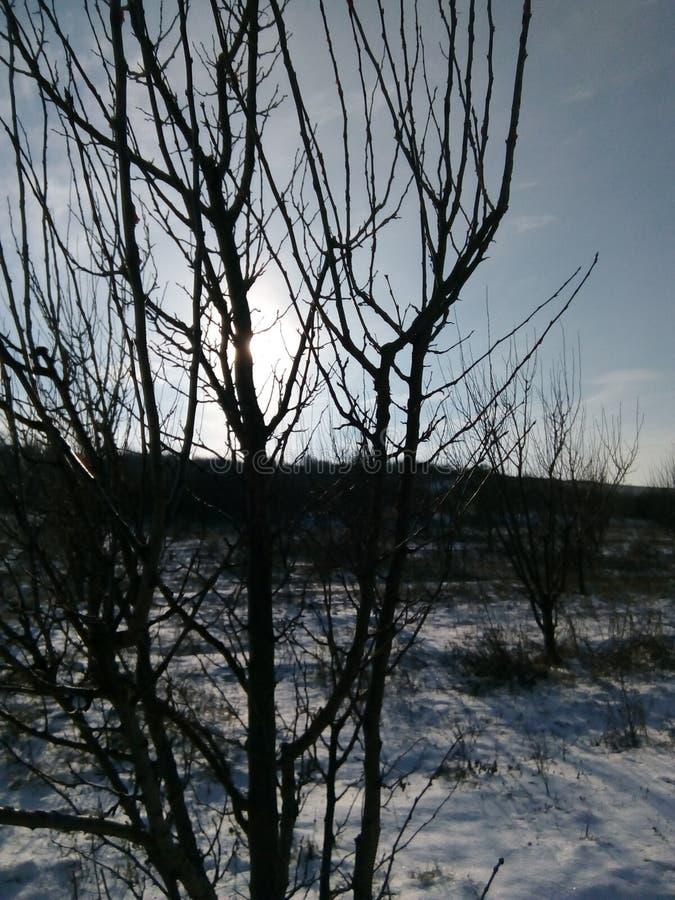 Tierra búlgara del árbol imagen de archivo