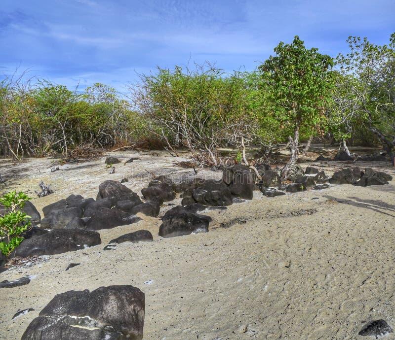 Tierra cubierta con la arena blanca con pocos árboles alrededor y algunas rocas imagenes de archivo