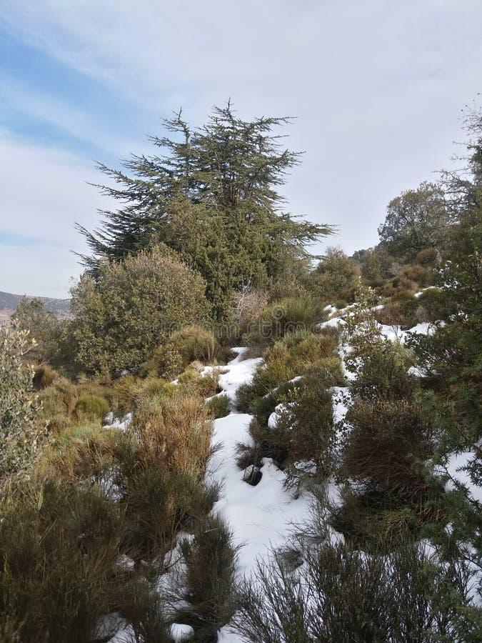 Tierra de Amazigh en Argelia fotos de archivo