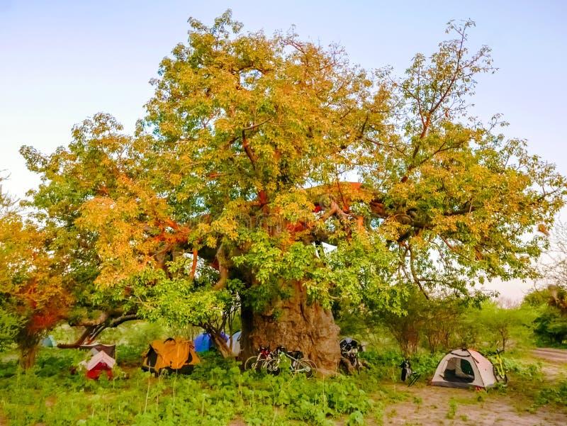 Tierra de campo en Botswana foto de archivo