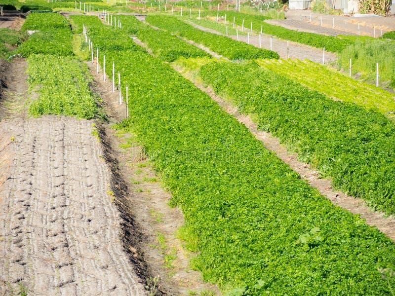 Tierra de cultivo verde para crecer vegetal fotos de archivo